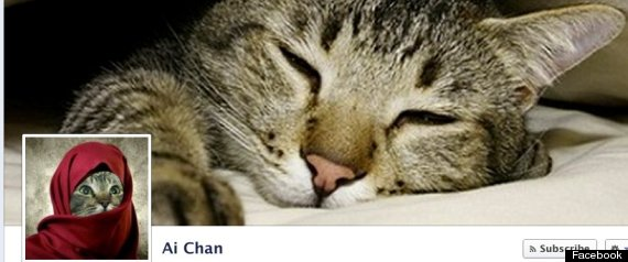 CATS OF FACEBOOK