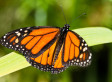A Life-Changing Trip: The Monarch Butterfly Migration in Mexico