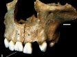 England & Cannibalism: Prehistoric Bones In English Cave Point To Ritual Eating Of Human Flesh