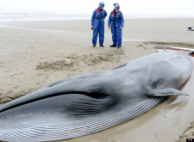 north sea whale