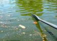 Sewage Pollution Still Fouling Waterways As Clean Water Act Turns 40