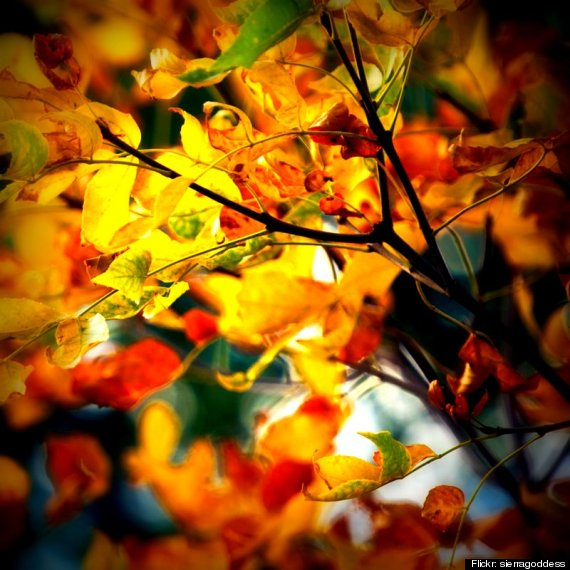 Autumn Poems: How Poets Have Described Autumn For Centuries  HuffPost UK
