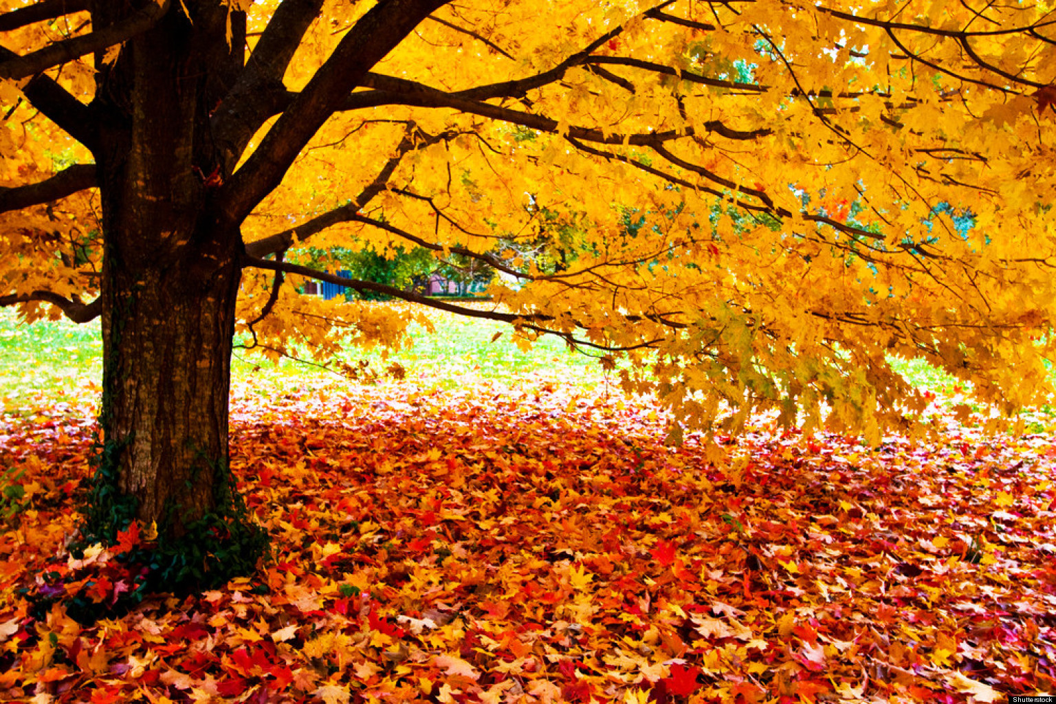 Image result for fall colours