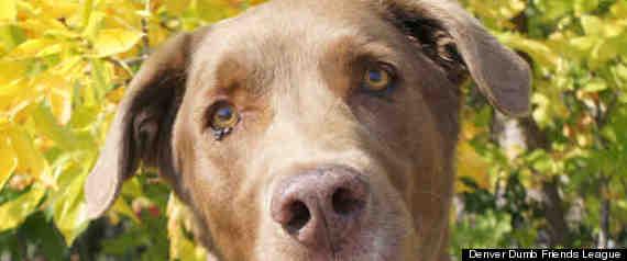 ADOPTABLE DOG COLORADO