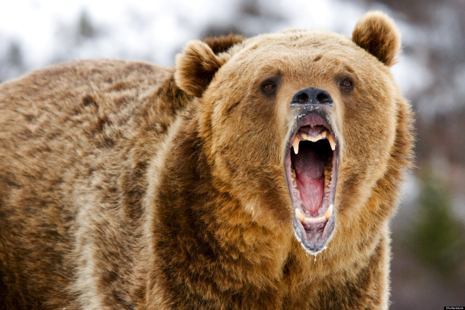 Banff Grizzly Bear Attack: Dog Killed, Trail Closed In ... - photo#20