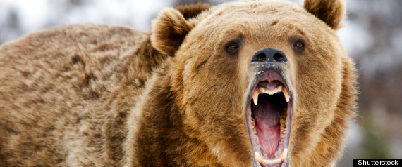 BANFF GRIZZLY BEAR ATTACK