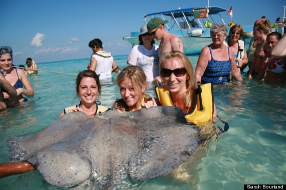 stingray photobomb before