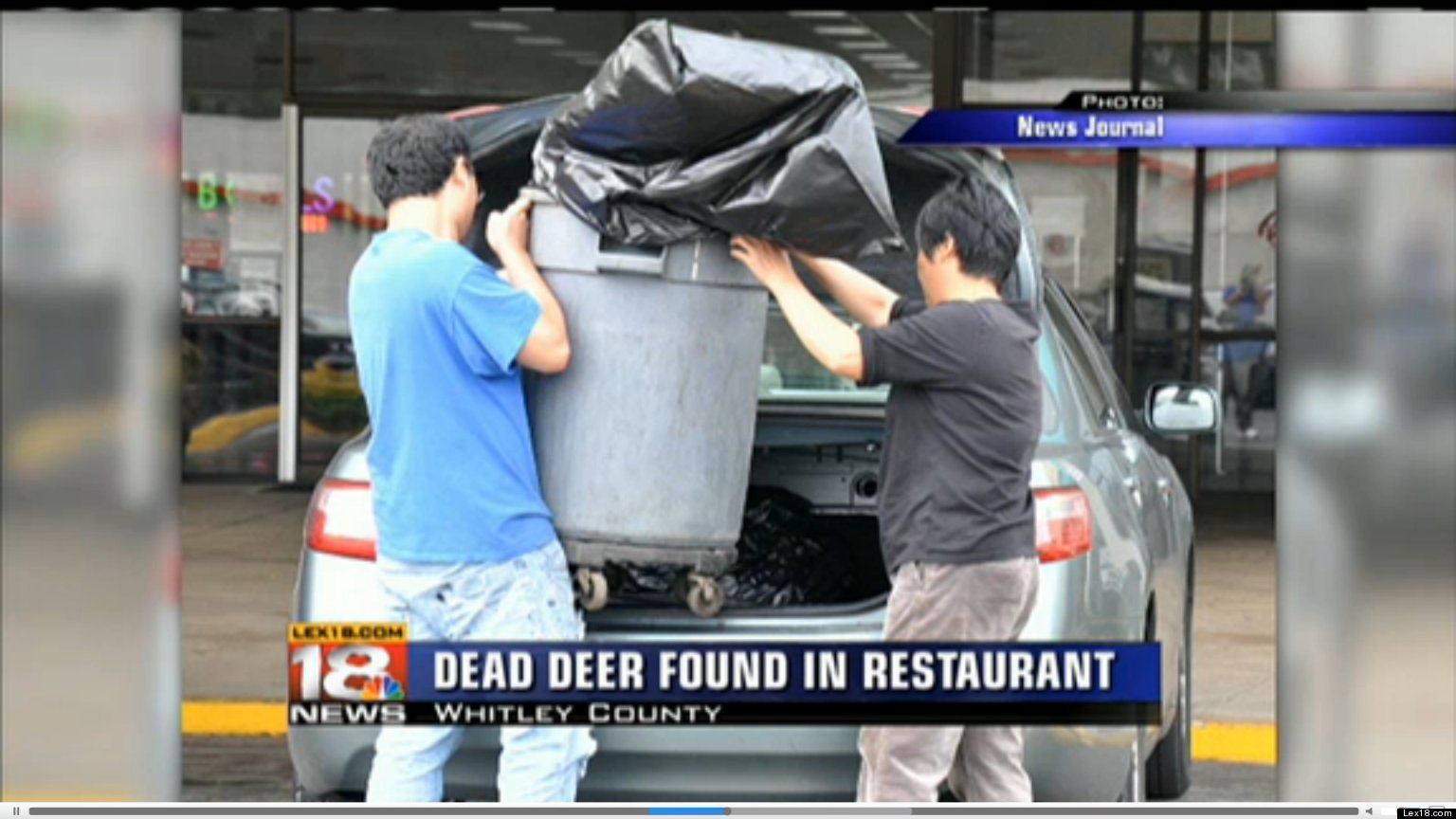Chinese Restaurant Closed After Dead Deer Found Inside Kitchen ...