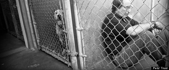 MIAMI ANIMAL ADOPTION PETS TRUST MICHAEL ROSENBERG