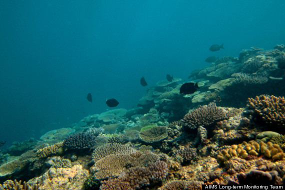 great barrier reef decline