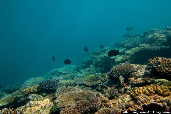 great barrier reef decline