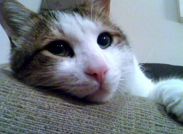 omar cat