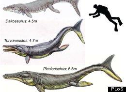 Of edinburgh in scotland reveals that prehistoric crocodiles long