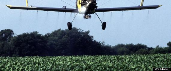 PESTICIDES GMO