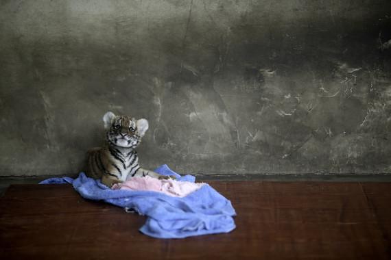 china_zoo