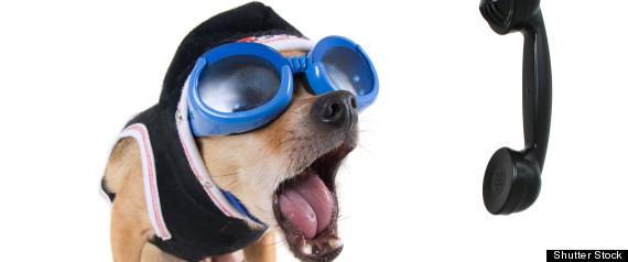 DOG PHONE CALL BURGLAR