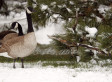Snow In The Denver Metro Area Expected To Continue Through Saturday