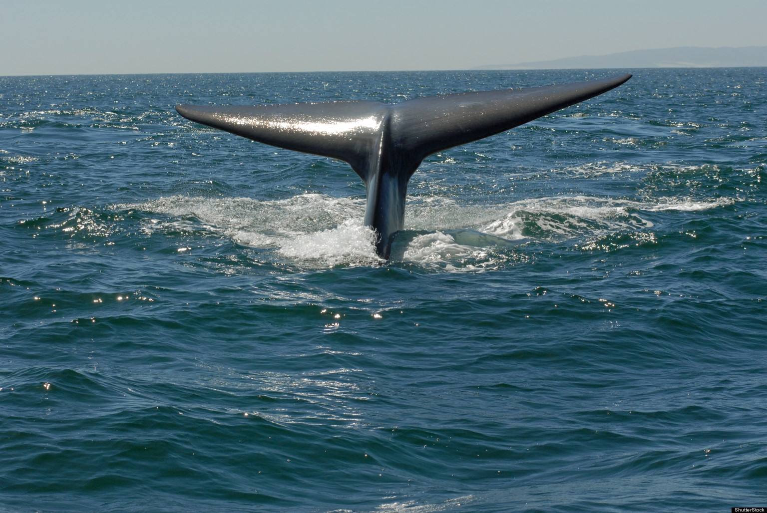 Blue Whales' Songs Tracked By Australian Scientists Using ...