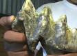 Mastodon Tooth: Davy Villanueva Finds Ancient Molar In San Antonio River