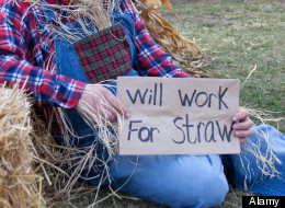 Recent College Graduate Hired To Be Human Scarecrow