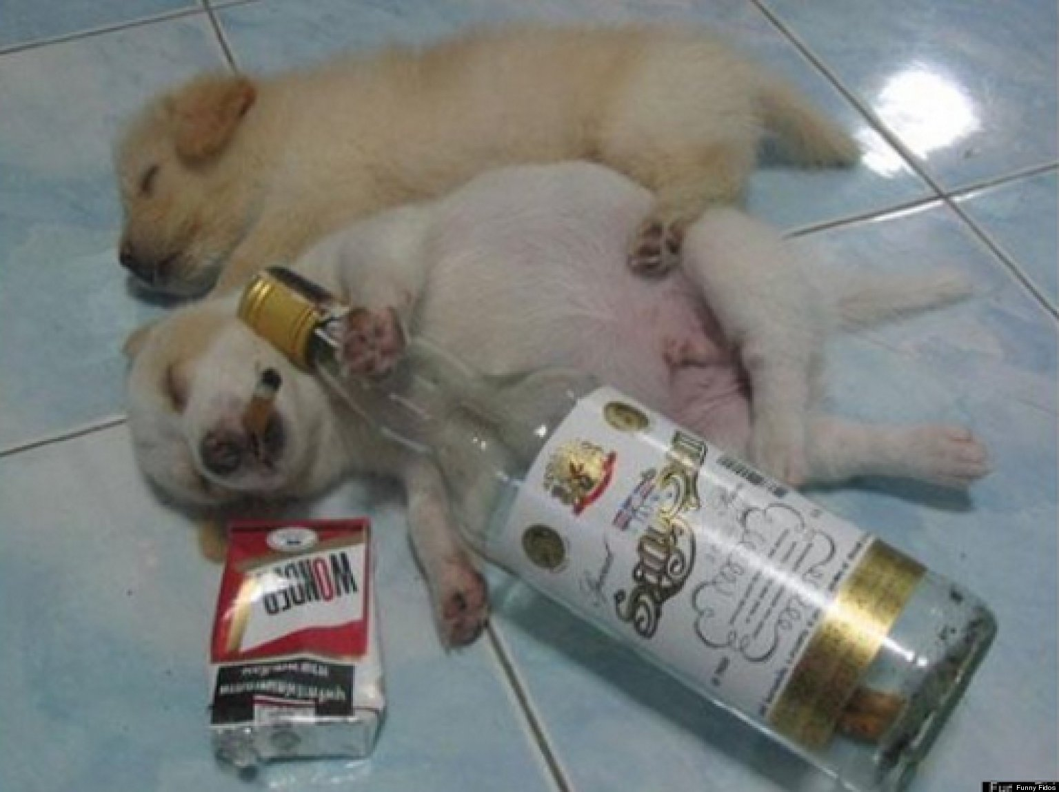 Drunk animals pets reenact one of those nights photos the