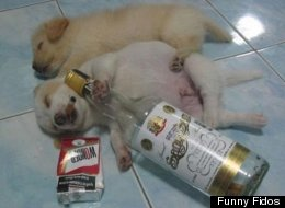 WATCH: These Animals Are Totally Wasted
