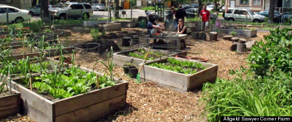 Chicago Community Garden Vandalized Logan Square