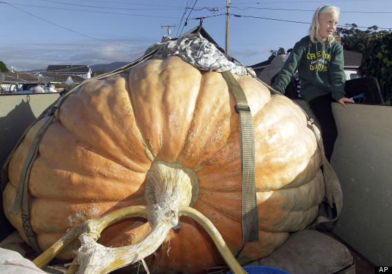 giant_pumpkin_contest