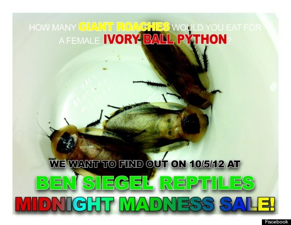 man dies roach eating contest ben siegel reptile