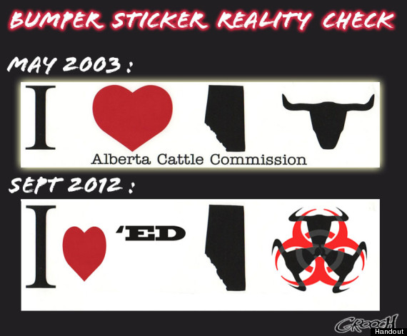 alberta beef bumper sticker
