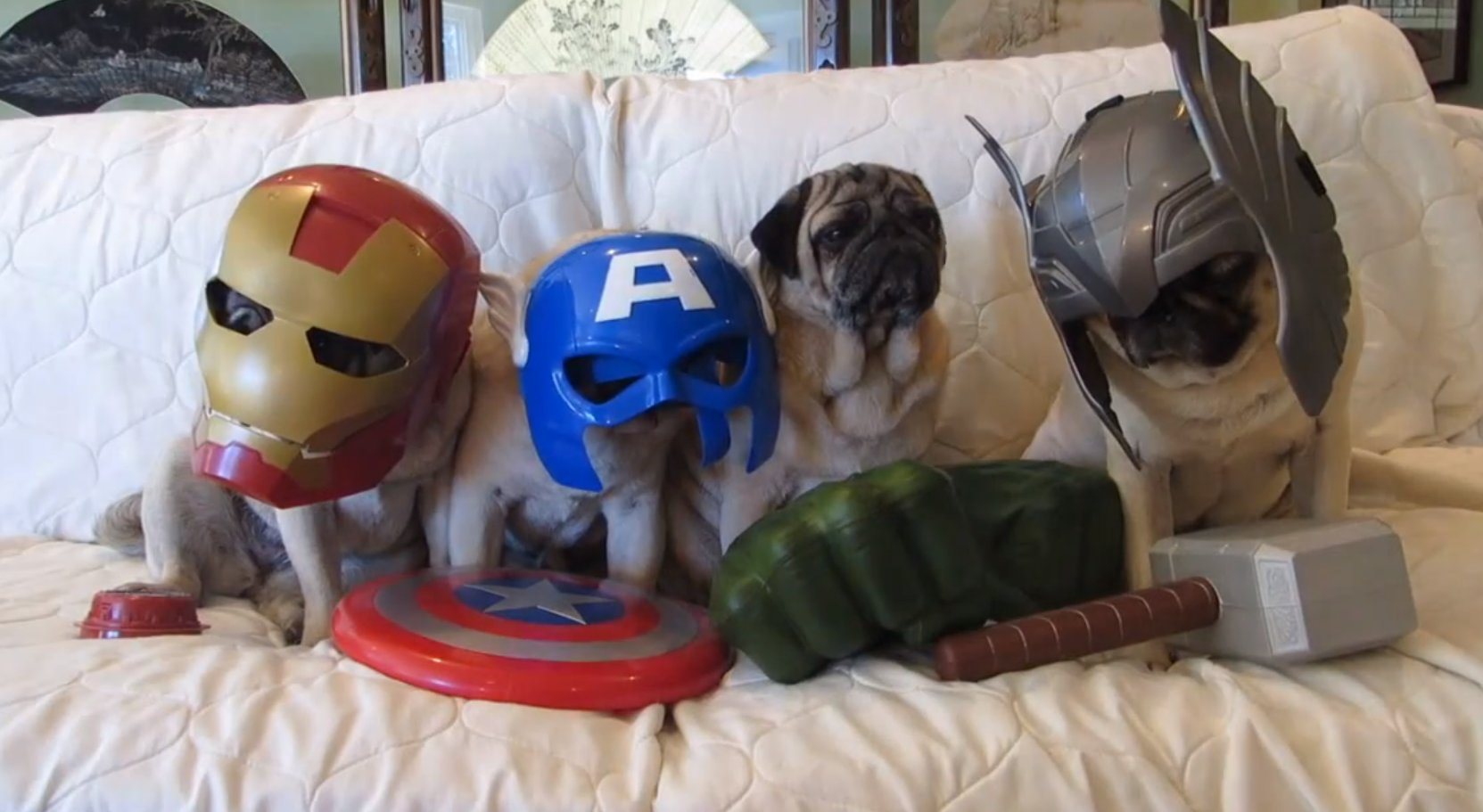 pug avengers