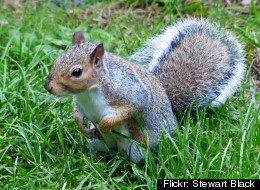 Squirrel Bubonic Plague California Tested Positive