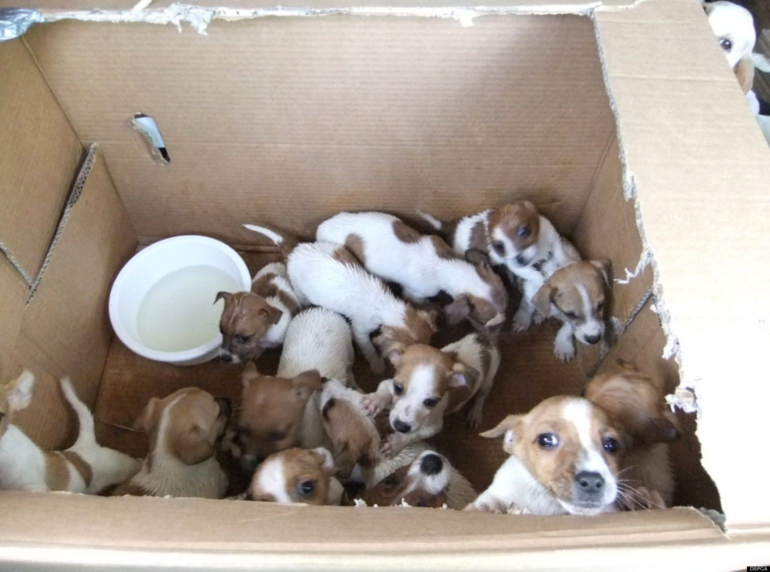 Puppies Found In Dublin Cars: Animal Cruelty Investigation ...