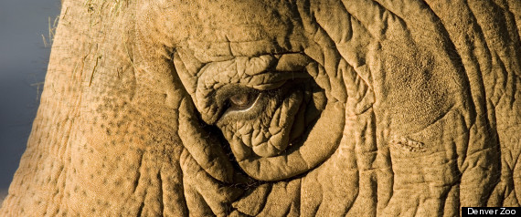MIMI DENVER ZOO ELEPHANT