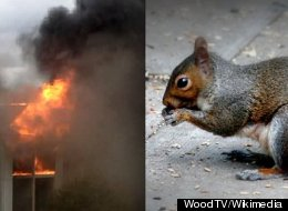 Squirrel Eating Torch Fire Apartment