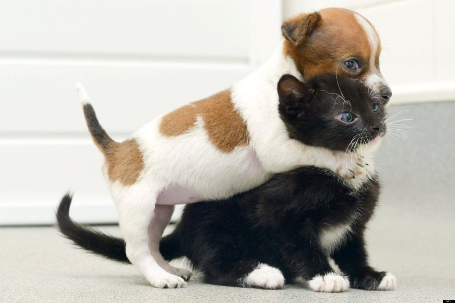 very cute puppies and kittens together