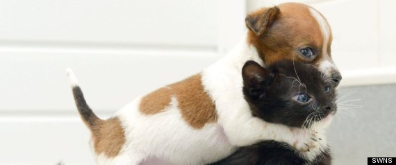 Puppy Kitten Sisters