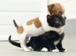 Puppy, Kitten Think They Are 'Sisters': Buttons The Jack Russell, Kitty The Cat Bond At Rescue Center (PHOTOS)