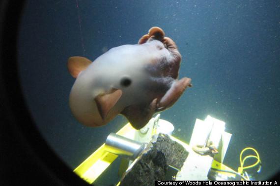 deep sea diving vehicle alvin