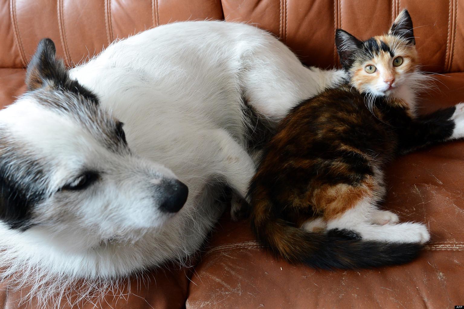esp rance de vie des chiens et des chats nos animaux de compagnie vivent plus vieux selon une. Black Bedroom Furniture Sets. Home Design Ideas