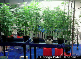 Chicago Marijuana Bust Pot Bust