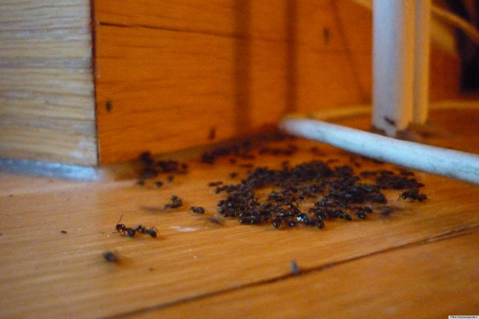 How to naturally get rid of ants how to naturally get rid of ants - Find Out If These 9 Weird Ways To Get Rid Of Ants Actually Work Photos Huffpost
