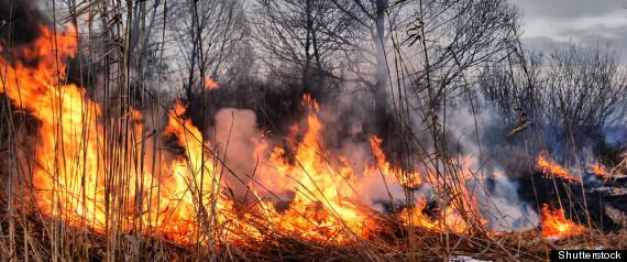 BURMIS GRASS FIRE