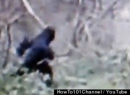 Bigfoot Hunter Blames Monster For Trashed Winnebago