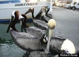 Your Photos Of Florida: The Animals
