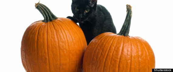 BLACK CATS HALLOWEEN