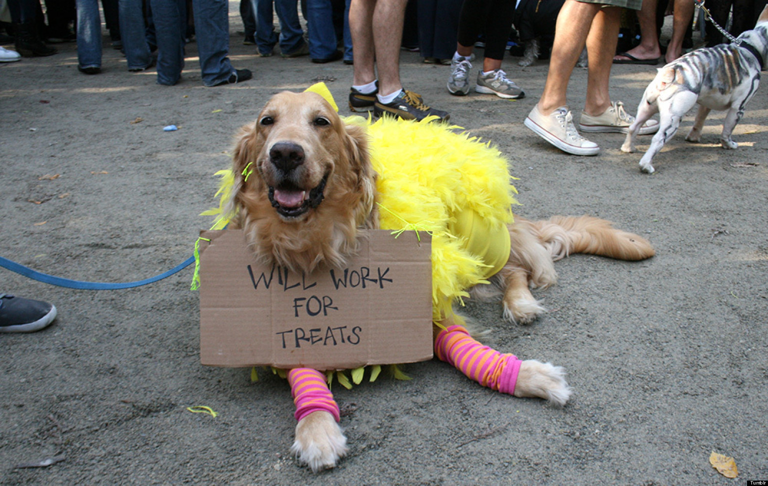 the funniest pet halloween costumes submit your own photos huffpost - Funniest Halloween Pictures