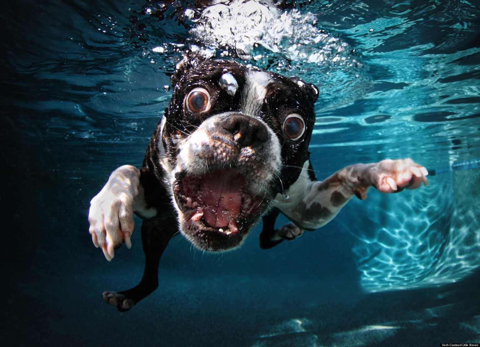 Underwater dogs facebook
