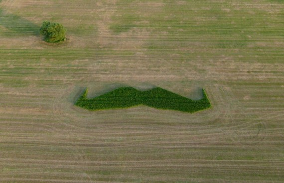 the 120ft giant mowstache