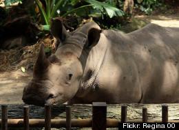 Virginia Could Ban Rhinos As Pets